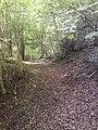 Trackway Through the Woods - geograph.org.uk - 515716.jpg