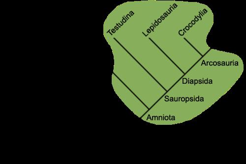 Traditional Reptilia