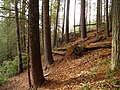 Trail to Little Rock Creek Falls - panoramio.jpg