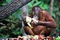 Treasure (Sabah, Borneo). EXPLORED Oct 28, 2015 ^166 - Flickr - ^Joe.jpg