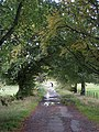 Tree-line avenue south of Beattock - geograph.org.uk - 1005976.jpg