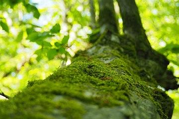 Tree Focus- P5185864.jpg