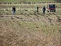 Tree planting near Middle Farm - geograph.org.uk - 1707629.jpg