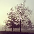 Trees in fog 2.jpg