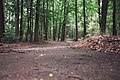 Trees with fallen leaves.jpg