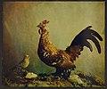Trichromie Oiseaux.jpg