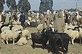Tunis1960-122 hg.jpg