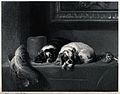 Two spaniels lying on a table covering. Reproduction of an e Wellcome V0020817.jpg