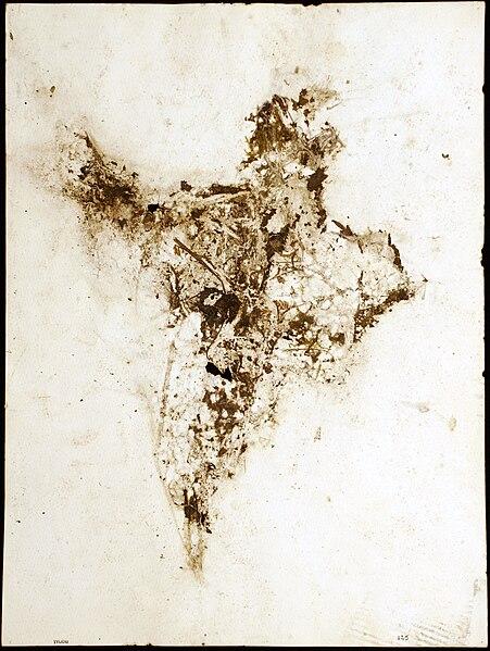 File:Tylicki Natural Art 225.jpg