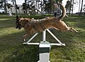 U.S. Air Force Staff Sgt. Shannon Hennessy, a military working dog handler with the 52nd Security Forces Squadron (SFS), instructs Katya, a military working dog with the 52nd SFS, to jump a hurdle while running 140319-F-NJ596-203.jpg