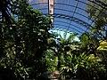 Umbracle del Jardí Botànic de València.JPG