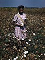 Unidentified young woman picking cotton (8878931260).jpg