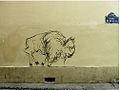 Urban buffalo.jpg