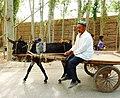 Uyghur man on his donkey cart. Kashgar.jpg