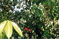 Végétation tropicale du jardin (3230148147).jpg