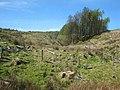 Valley at Bargowla - geograph.org.uk - 797919.jpg