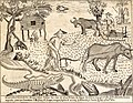 Various Philippine animals and plants frame 1, detail from Carta Hydrographica y Chorographica de las Yslas Filipinas.jpg