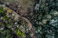 Veined forest from above (Unsplash).jpg
