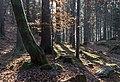 Velden am Wörther See Köstenberg Wanderweg zur Burgruine Hohenwart 08112018 5295.jpg