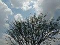 Vellore Cloudy.jpg