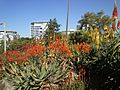 View across to apartments from the aloes. - panoramio.jpg