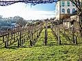 Vignoble de Saint-Dizier-l'Evêque.jpg