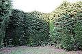 Villa la quiete, giardino, 'stanza' verde con nicchie un tempo con statue 02.JPG