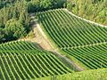 Vineyards (1).jpg
