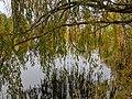 Vrba na břehu rybníku Brůdek.jpg