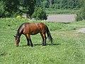 Vyazovenka - Horse - 04.jpg
