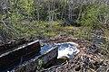 WMEE-exp2019-(086) Kolga jõgi.jpg
