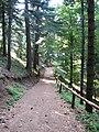 WW I Trail in Pelister National Park 02.jpg