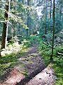 Waldmoor-Torfstich, Würzbacher Moor - panoramio.jpg