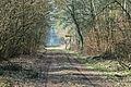 Waldweg im Forst Rundshorn IMG 4966.jpg