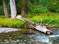 Wallowa River in Wallowa Lake State Park, Oregon (37784406156).jpg