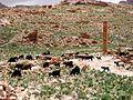 Wandering goat herd - panoramio.jpg