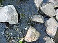 Water flowing around rocks.JPG