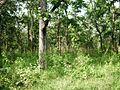 Wayanad Wildlife Sanctuary, Muthanga Range - panoramio (11).jpg