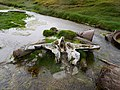 Whale bone at the abandoned whaling station.jpg