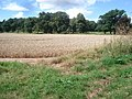 Wheat field near Homend Park - geograph.org.uk - 546562.jpg