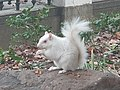 White squirrel.jpg