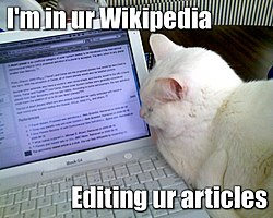 Lolcat or Cat Macro with white cat on laptop computer