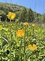 Wild-Blumenwiese.jpg