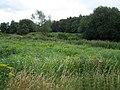 Wild Flowers Near Heath Hayes - geograph.org.uk - 515901.jpg