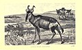Wild beasts and their ways (Plate 24) (6505690535).jpg