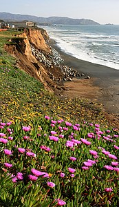 Wild flowers and erosion
