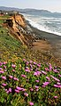 Wild flowers and erosion in Pacifica.jpg