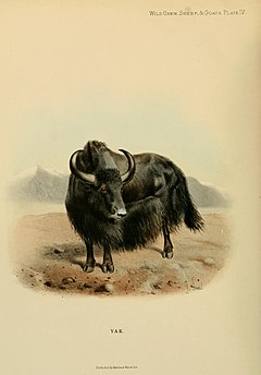 Wild oxen, sheep and goats of all lands, living and extinct (Plate IV) BHL9370000.jpg