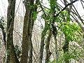 Wildlife's @ Wayanad wildlife Sanctuary - panoramio (1).jpg