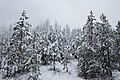 Winter 2008 - panoramio.jpg